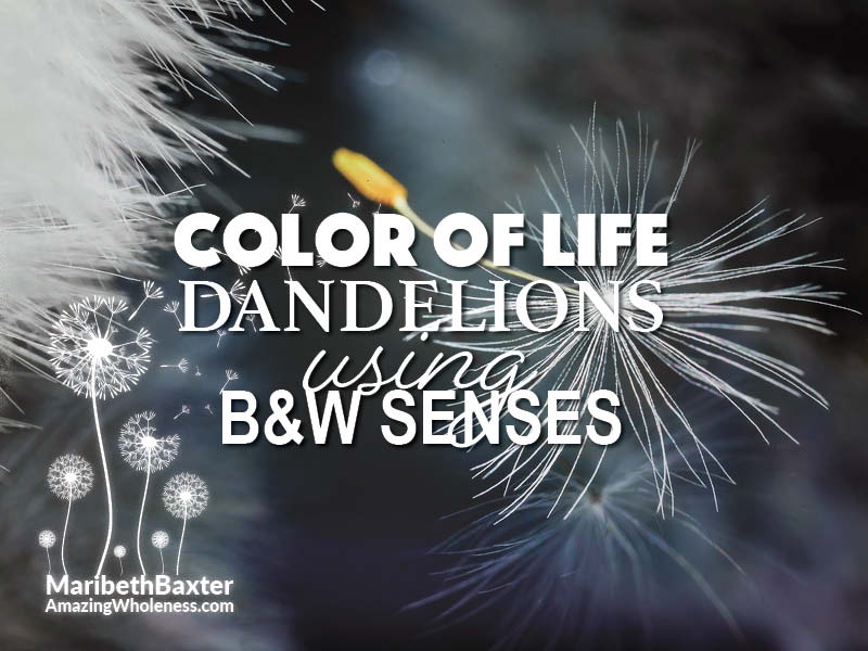 color of life, using our black and white senses, dandelions