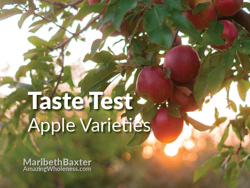 taste testing apple varieties