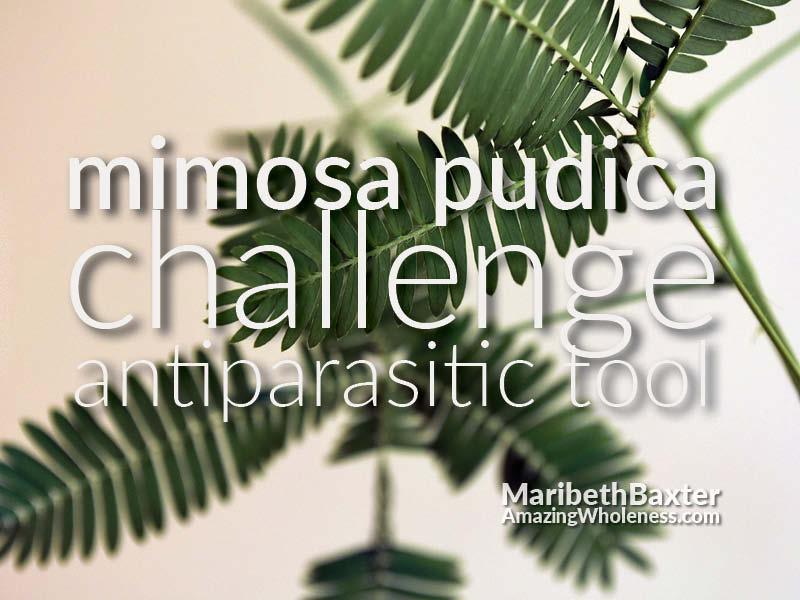 mimosa pudica (Para 1) challenge as antiparasitic tool.